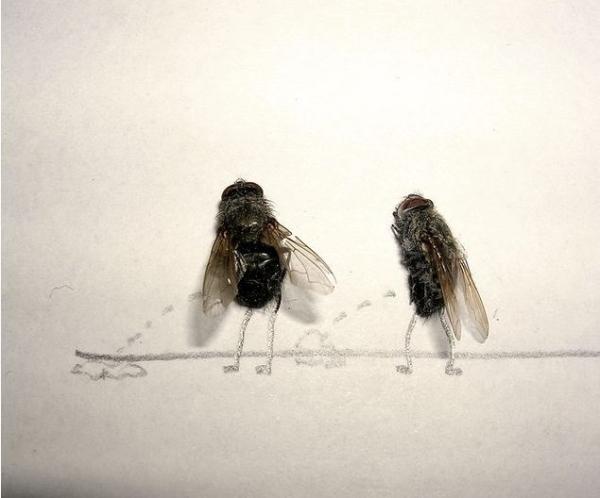 Dead Fly Art 2