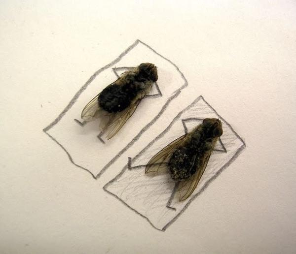 Dead Fly Art1