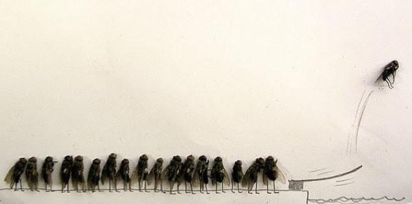 Dead Fly Art3